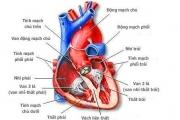 tổng quan về tim mạch